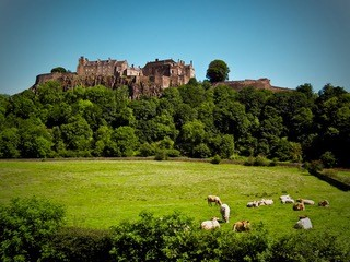 Falleninch's distinctive herd under the shadow of Stirling Castle